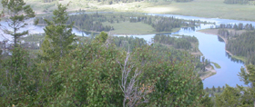 part of Oxbow Bend from Signal Mtn summit: