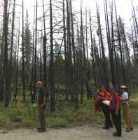 photo by Peter Ye on trail to bearpaw lake: four hikers in burnt forest with two years regrowth of brush and grasses
