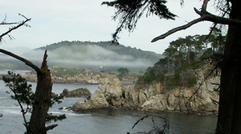 point lobos near entrance to blue fish cove: