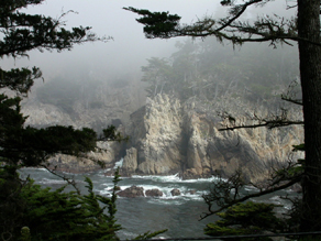 Point Lobos cypress cove: