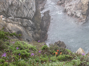 point lobos wildflowers and cliff: