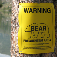 sign warning bear: sign warning about bears frequenting the area tacked to a tree