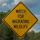 sign watch for migrating wildlife:
