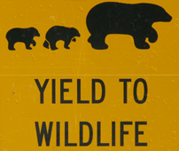 sign yield to wildilfe bears drawing: