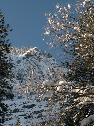 yosemite snow laden trees and touch of morning light on cliffs: