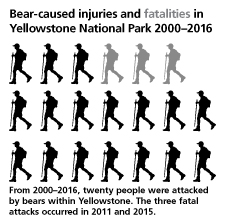 NPS chart depicting bear -cause injuries and fatalities in Yellowstone National park