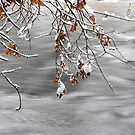 Yosemite National Park Merced River  and snowy branches by Eric Kulikoff used with permission