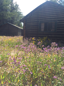 cabin in background, wildflowers in foreground
