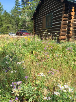 colter bay cabin with wildflowers
