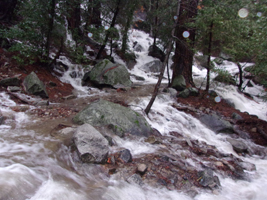 multiple creeks flowing across a normally dry trail