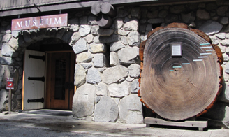 museum entrance with cross section of tree