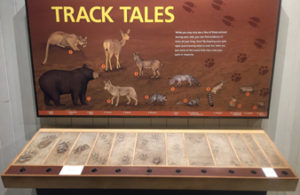 track tales display at Happy Isles