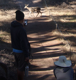 Jovill photographs deer on trail at Point Lobos