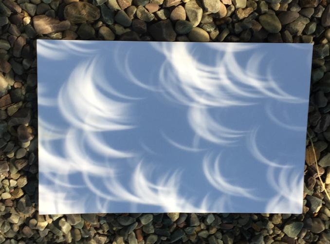 multiple solar eclipse projections through Aspen leaves