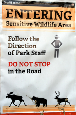 sign that says entering sensitive wildlife area, follow the direction of park staff. Do not stop in the road