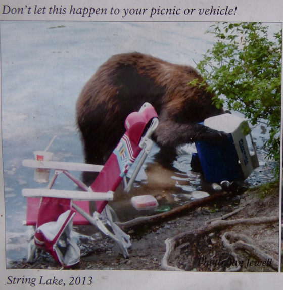 NPS photo of a bear getting into a ice chest