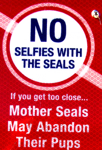 sign that says no selfies with the seals If you get too close mother seals may abandon their pups