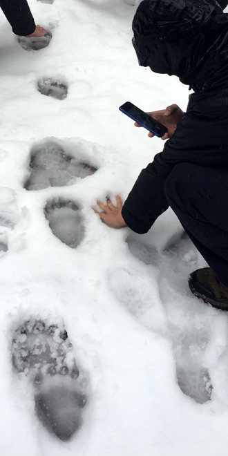 person puts his hand in the snow next to a bear paw print