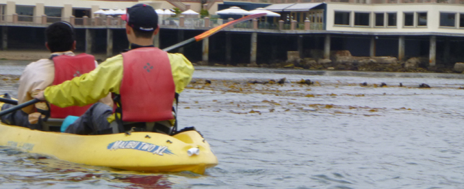 row of otters in background of kayakers