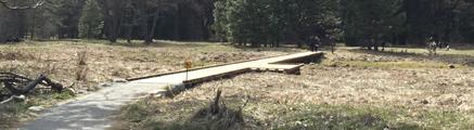 boardwalk and meadow