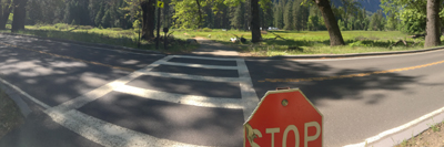 stop sign, cross walk and road