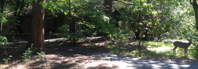 deer at cottages May 2019