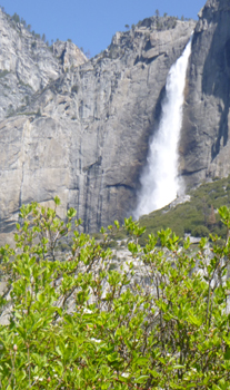 waterfall and large bush