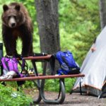 bear on top of a picnic table