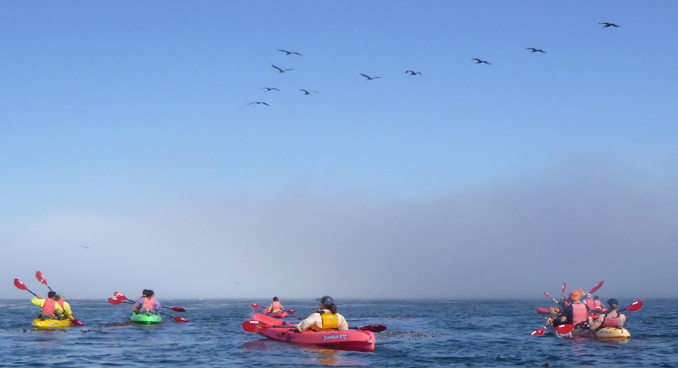 pelicans flying over kayakers