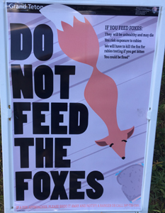 sign that saysDO NOT FEED THE FOXES If you feed foxes:  They will be unhealthy and may die. You risk exposure to rabies. We will have to kill the fox for rabies testing if you get bitten. You could be fined.