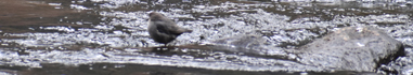 bird sitting on a low rock in the river