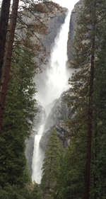 Yosemite falls with tress at each side of the walkway