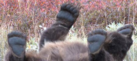 bottoms of four bear feet