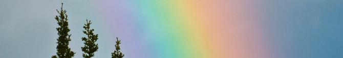 tops of trees, rainbow behind
