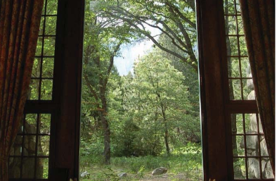 trees through window