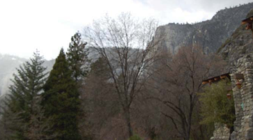 trees block view of Yosemite cliffs