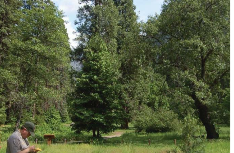section of forest
