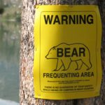 sign warning about bears frequenting the area tacked to a tree