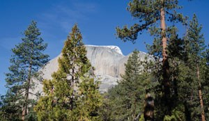 back of half dome with trees in foreground