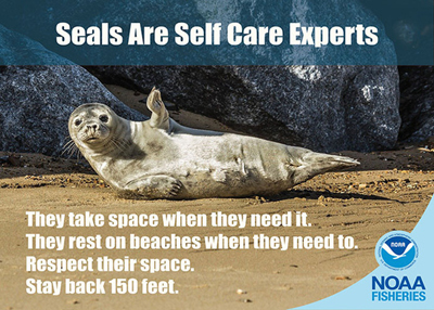 seal lying on side on beach