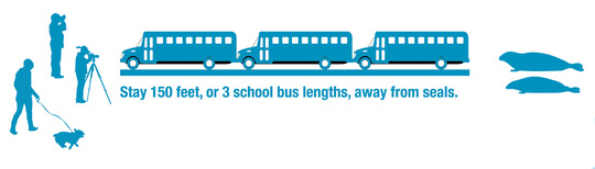 drawing of three school buses in a row to represent 150 feet to stay away from seals