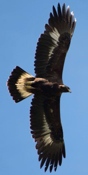 bird in flight from below