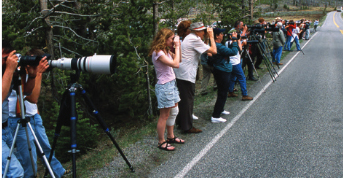 people with cameras in a line alongside a highway