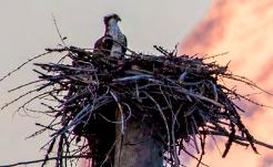 bird on huge nest
