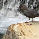 bird on a rock by a water fall