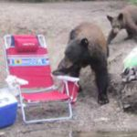 bear and cub and cooler