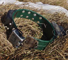 wide neck band collar