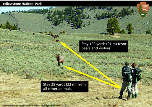 people watching wildlife with arrows showing 100 yards and 25 yards
