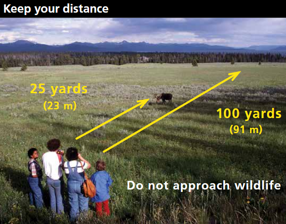 people in relation to distance to animals