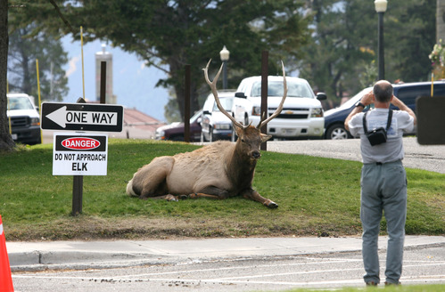 photographer too close to elk, with sign that says danger do not approach elk